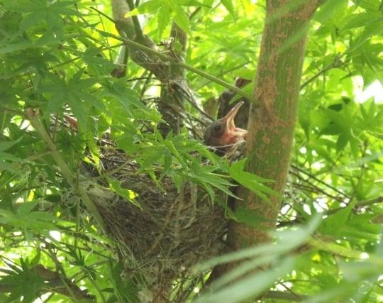 巣の中にいる小鳥の夢