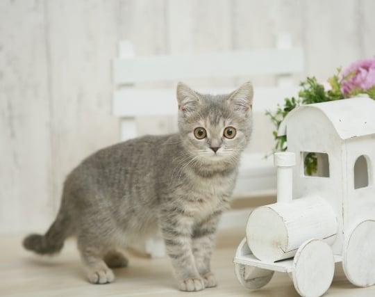 元気で綺麗な猫の夢