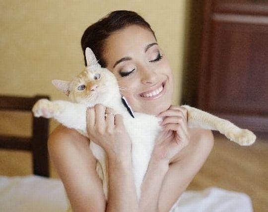 猫をかわいがる夢