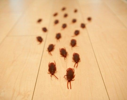 多数のゴキブリが現れる夢