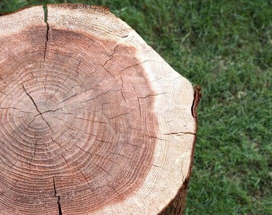 木を切る夢