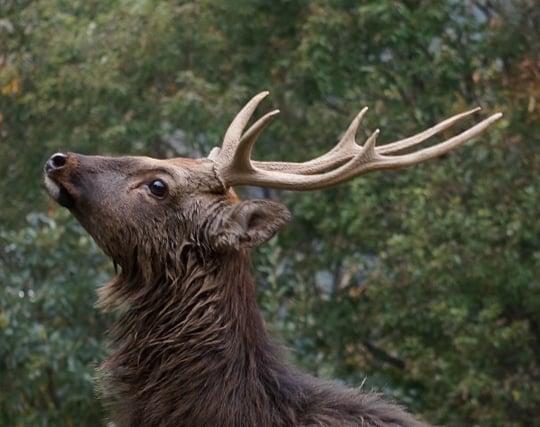 鹿の角が落ちる夢