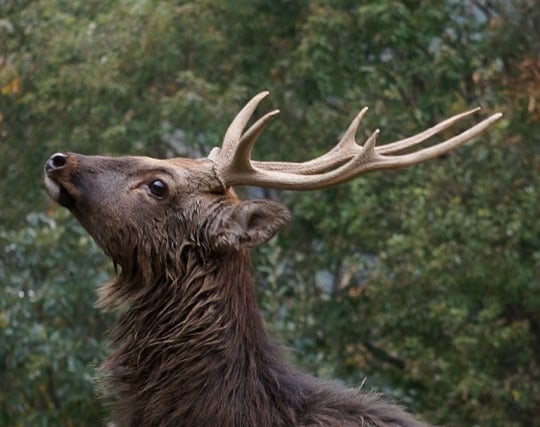 <strong>鹿</strong>の角が落ちる夢