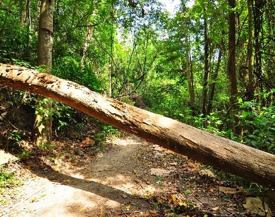 木が倒れる夢