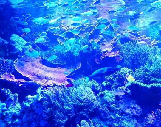 水族館で魚を観察する夢