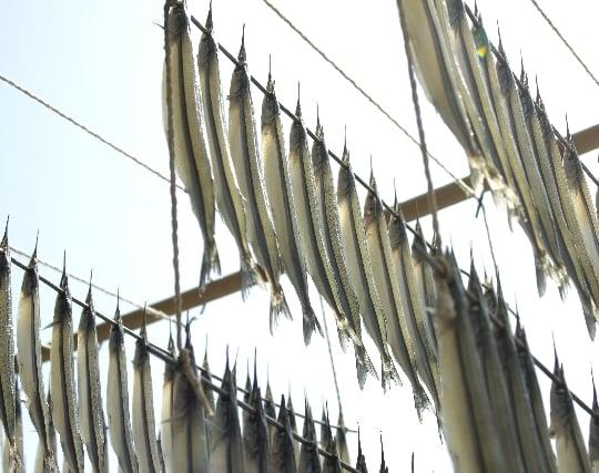 魚の干物の夢
