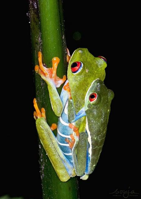 <strong>カラフル</strong>な蛙が現れる夢