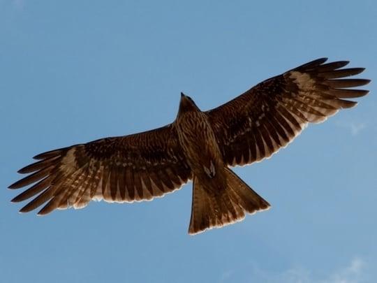 鷹が死ぬ夢