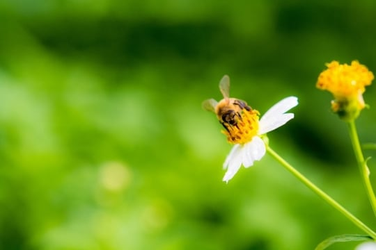 蜜<strong>蜂</strong>の夢