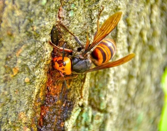 スズメバチの夢