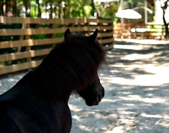 黒馬(黒鹿毛)の夢