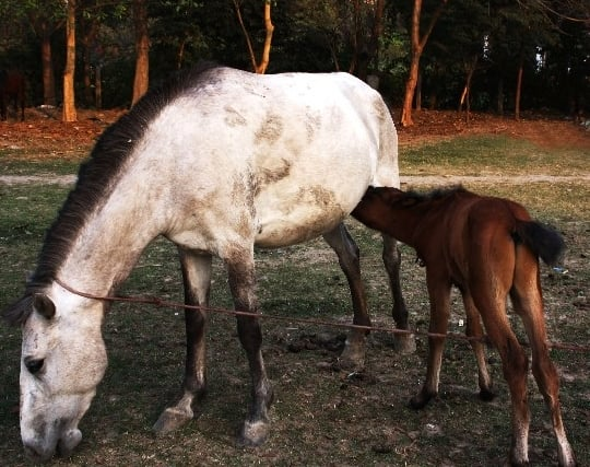 母馬が現れる夢