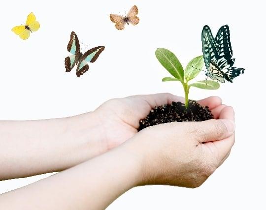 美しい蝶が華麗に空を舞う夢