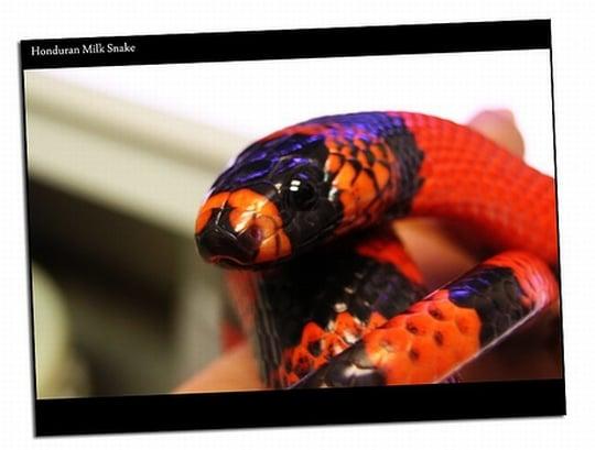 カラフルな蛇が現れる夢