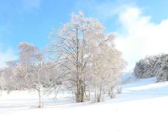 明るいイメージの冬の夢