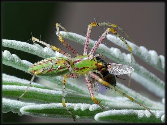 蜘蛛に食べられる夢