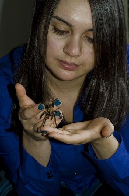 蜘蛛をペットとして飼い馴らしている夢