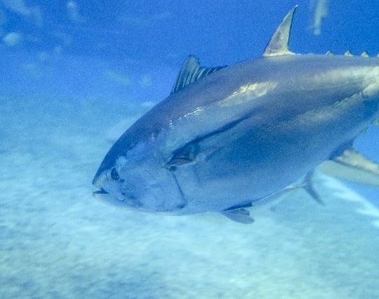 魚が悠々と泳ぐ