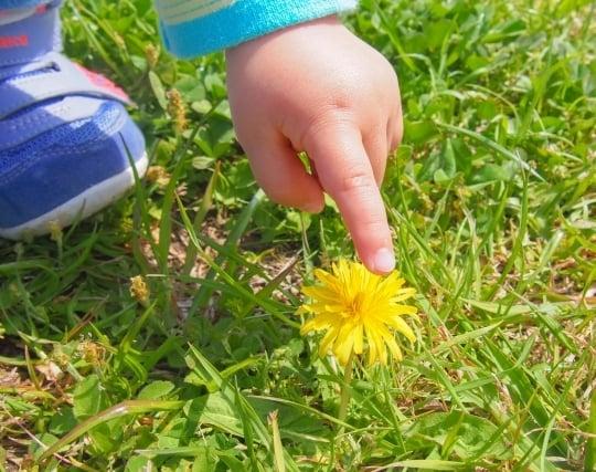 触った物が<strong>花</strong>に変化する夢