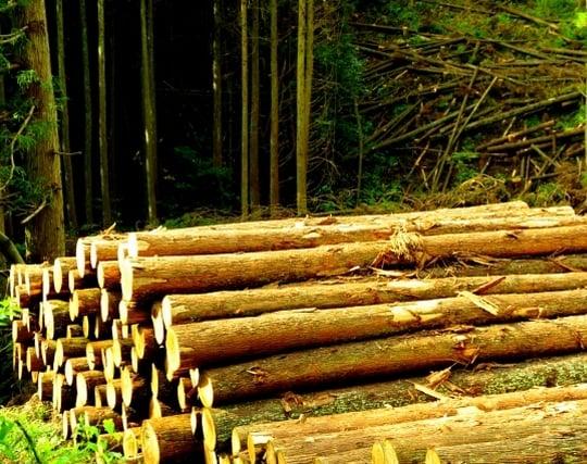 たくさんの木材がある夢