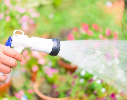 庭に水を撒く夢