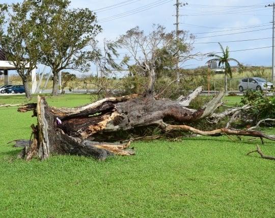 強風で木が<strong>倒れる</strong>夢