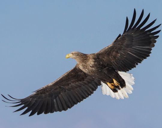 羽根の夢・翼の夢