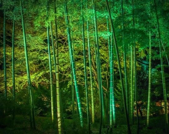 竹林を見る夢