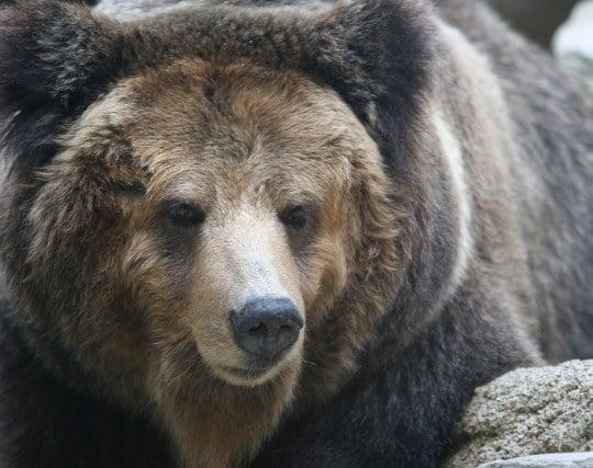熊が現れて怖い夢