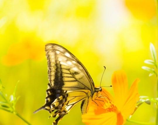 蝶が花にとまる夢