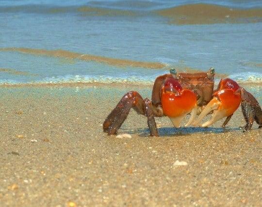 蟹が現れる夢