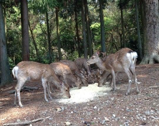 鹿の群れを見る夢