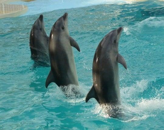 イルカのショーを見る夢