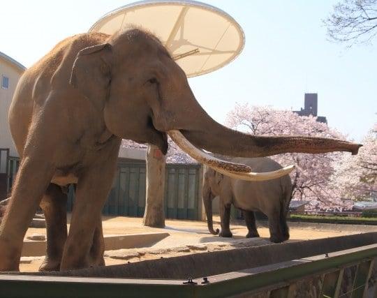 象の鼻が印象的な夢