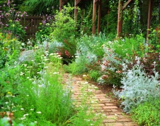 植物を植える夢
