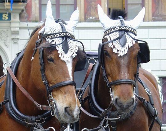 馬が結婚する夢