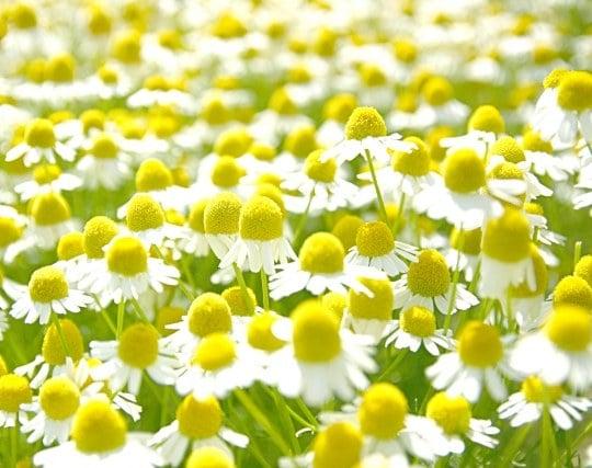 種から育った植物に花が咲く夢