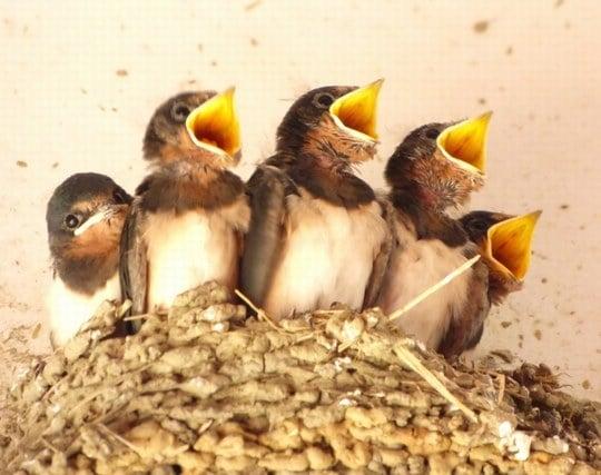 燕の巣に子供がいる夢