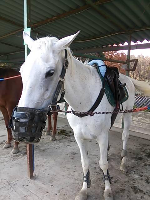 馬装嫌いな馬